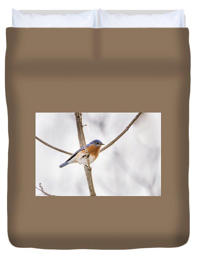 Bluebird Duvet Cover featuring the photograph Bluebird Portrait by Barbara Blanchard