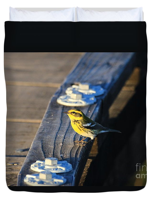 Townsend's Duvet Cover featuring the photograph Boardwalk Inspector by Craig Corwin