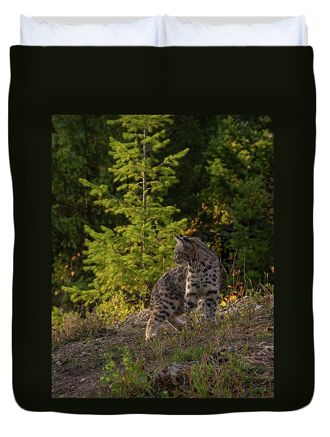 Bobcat Duvet Cover featuring the photograph Bobcat kitten in the morning by Roy Nierdieck