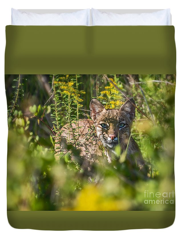 Lynx Duvet Cover featuring the photograph Bobcat Lynx In Hiding by Anne Kitzman
