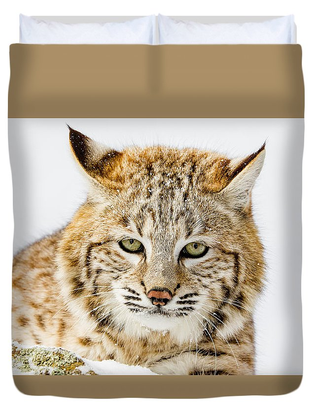 Cat Duvet Cover featuring the photograph Bobcat Stare by Mike Centioli