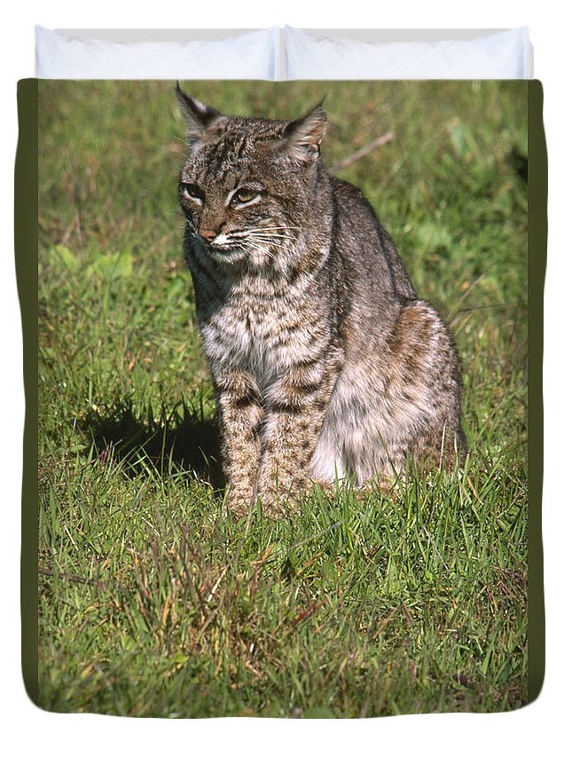 Bobcat Duvet Cover featuring the photograph Bobcat - Wildcat Beach by Soli Deo Gloria Wilderness And Wildlife Photography