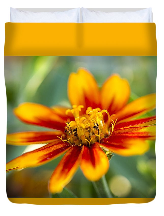 Flower Duvet Cover featuring the photograph Bold by Andrea Kappler