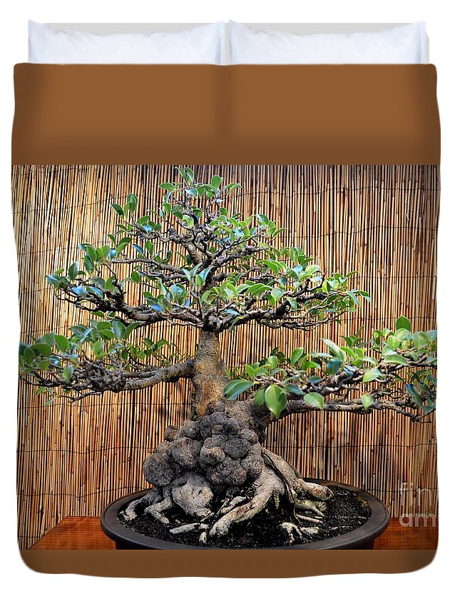 Bonsai Dwarf Banyan Tree Duvet Cover For Sale By Mary Deal