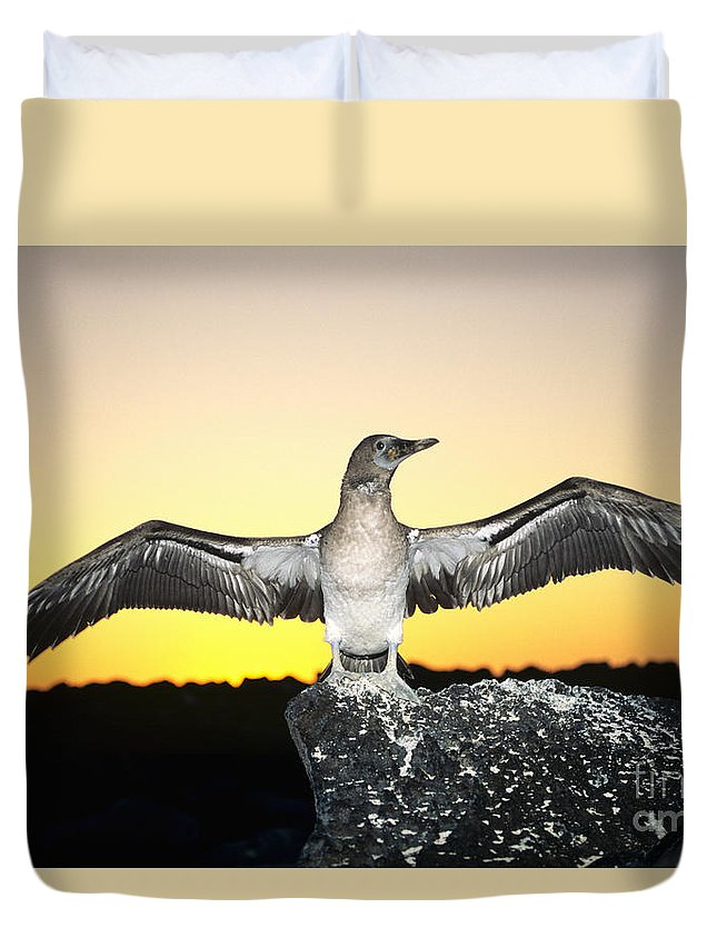 Animal Art Duvet Cover featuring the photograph Booby At Sunset by Dave Fleetham - Printscapes