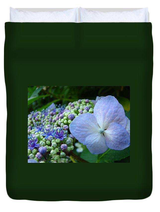 Hydrangea Duvet Cover featuring the photograph Botanical Garden Blue Hydrangea Flowers Baslee Troutman by Baslee Troutman