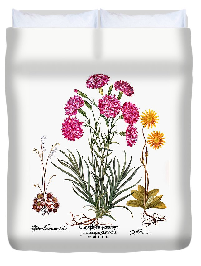 1613 Duvet Cover featuring the photograph Botany: Flowers, 1613 by Granger
