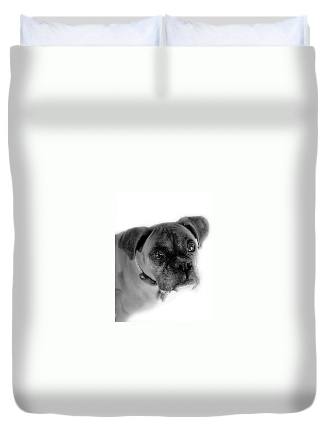 Boxer Duvet Cover featuring the photograph Boxer Dog by Marilyn Hunt