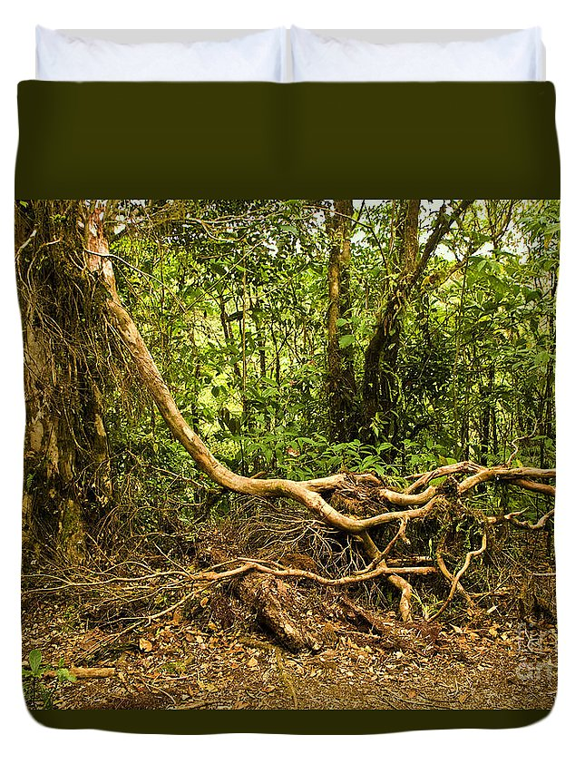 Tree Duvet Cover featuring the photograph Branching Out In Costa Rica by Madeline Ellis