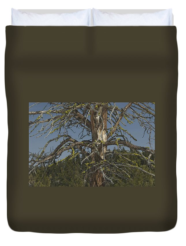 Tree Duvet Cover featuring the photograph Branching Out by Sara Stevenson