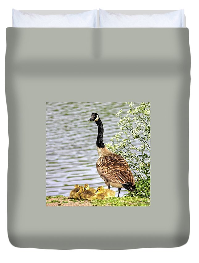 Geese Duvet Cover featuring the photograph Branta Canadensis  #canadagoose by John Edwards