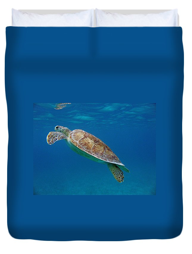 Green Sea Turtle Duvet Cover featuring the photograph Breathe Green by Kimberly Mohlenhoff