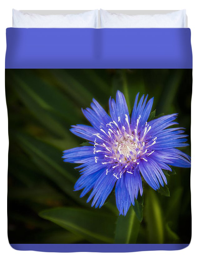 Flowers Duvet Cover featuring the photograph Bright Blue Aster by Penny Lisowski