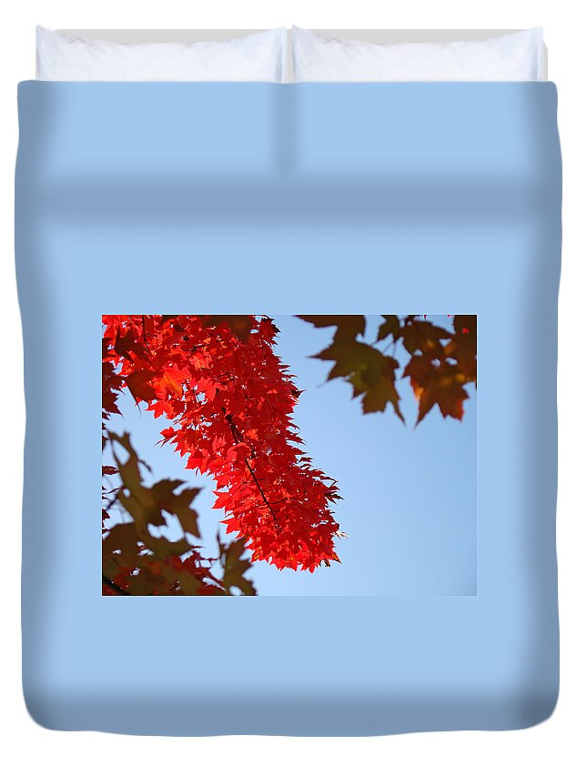 Nature Duvet Cover featuring the photograph Bright Red Sunlit Autumn Leaves Fall Trees by Baslee Troutman