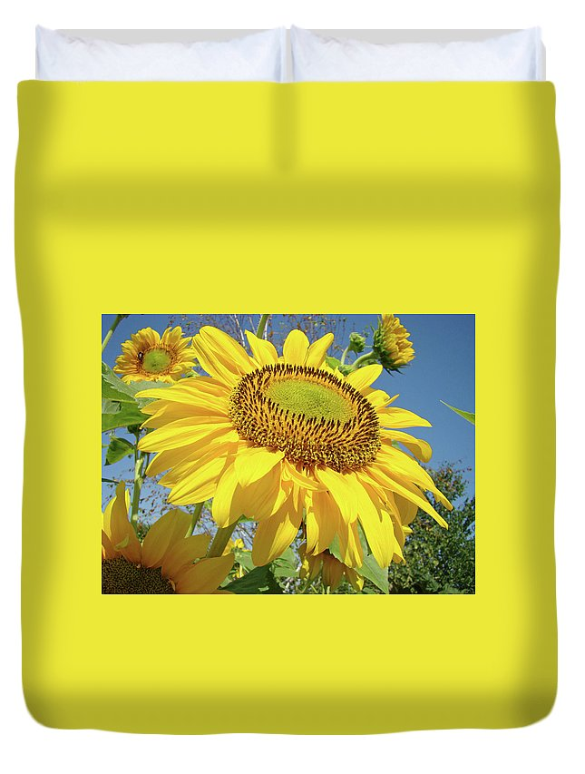 Sunflower Duvet Cover featuring the photograph Bright Sunny Happy Yellow Sunflower 10 Sun Flowers Art Prints Baslee Troutman by Baslee Troutman