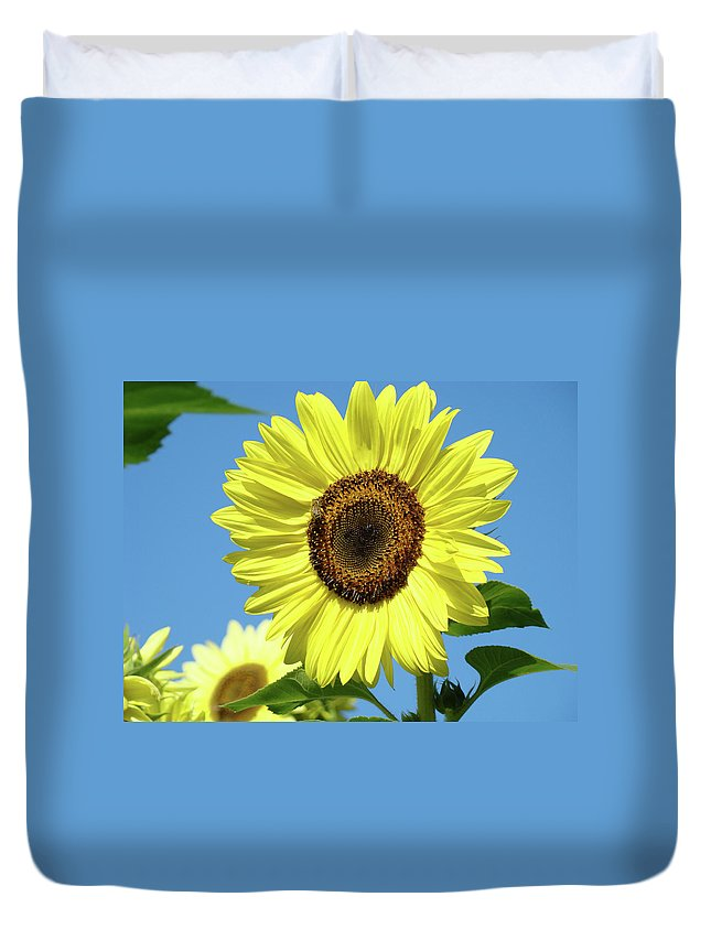 Sunflower Duvet Cover featuring the photograph Bright Yellow Sunflower Art Prints Blue Sky Baslee Troutman by Baslee Troutman