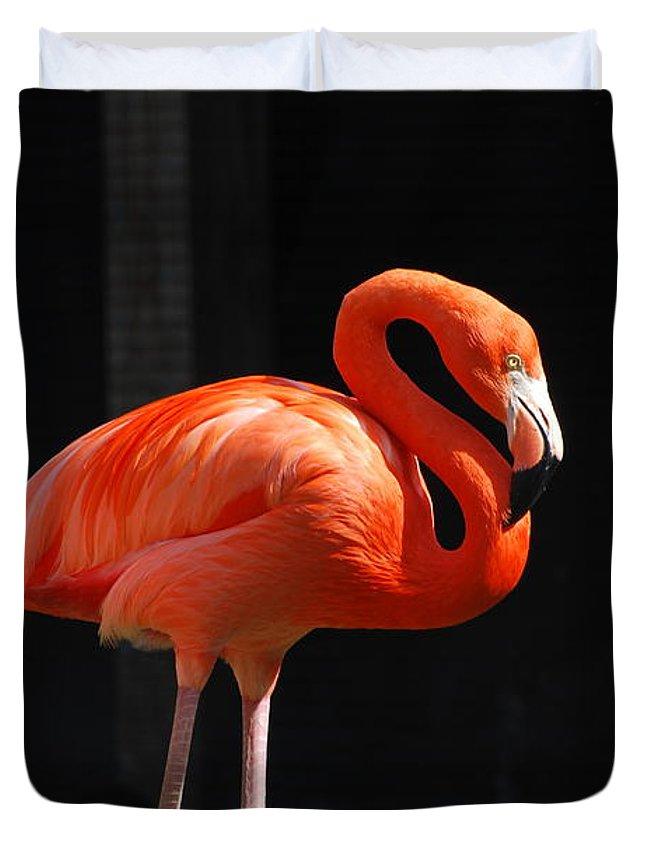 Flamingo Duvet Cover featuring the photograph Brilliant Pink Flamingo by DejaVu Designs