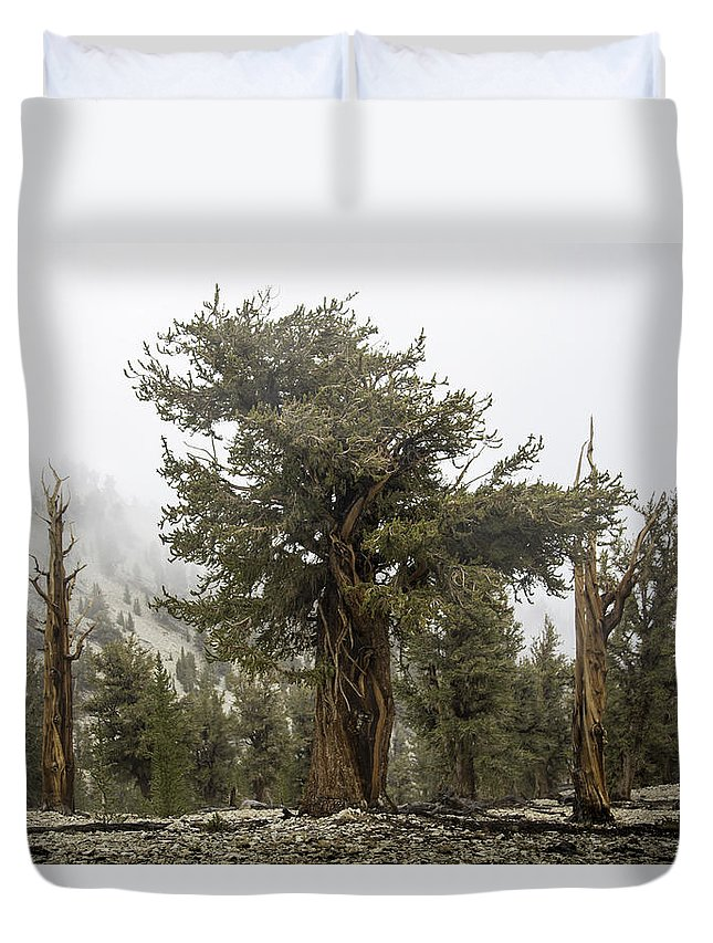 Bristlecone Duvet Cover featuring the photograph Bristlecone Elder by Dusty Wynne