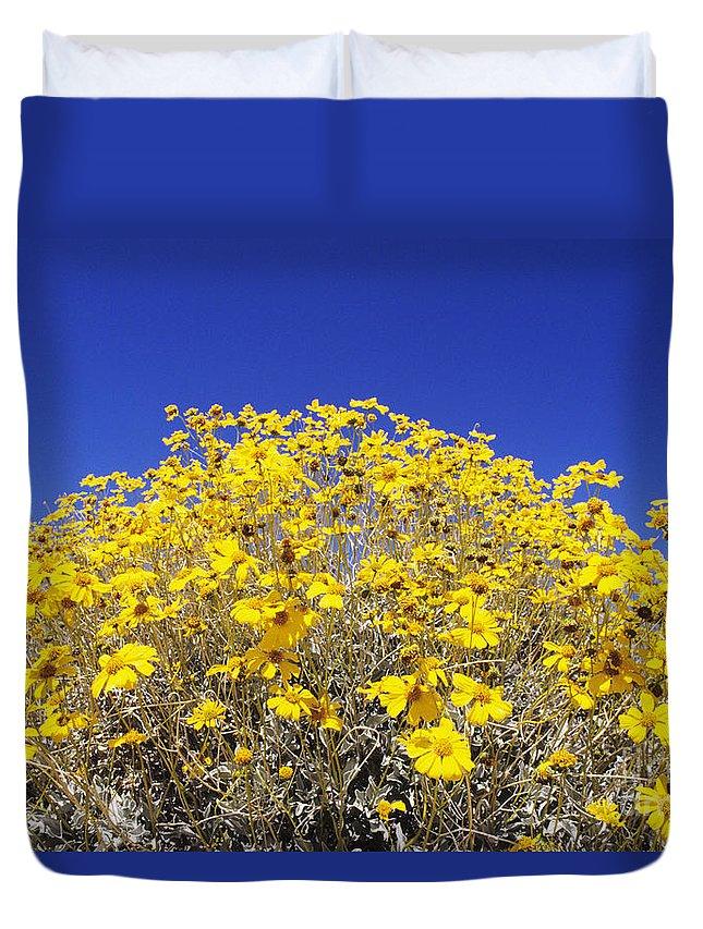 Autumn Duvet Cover featuring the photograph Brittlebush by Greg Vaughn - Printscapes