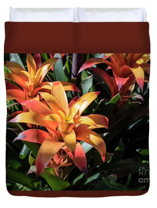 Succulent Duvet Cover featuring the photograph Bromeliads by Judy Wolinsky