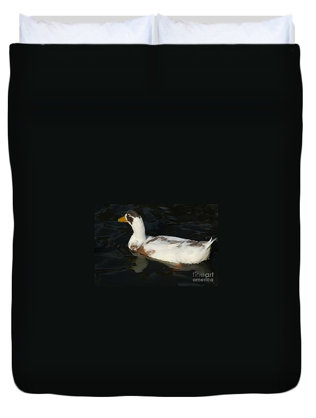 Bird Duvet Cover featuring the photograph Brown And White Duck by D Nigon