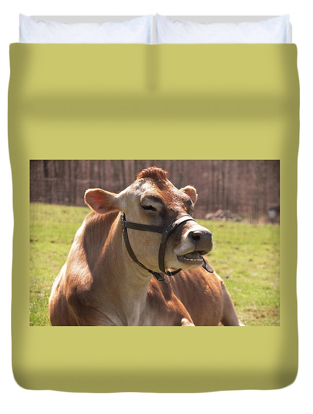 Cow Duvet Cover featuring the photograph Brown Cow Chewing by Diane Schuler