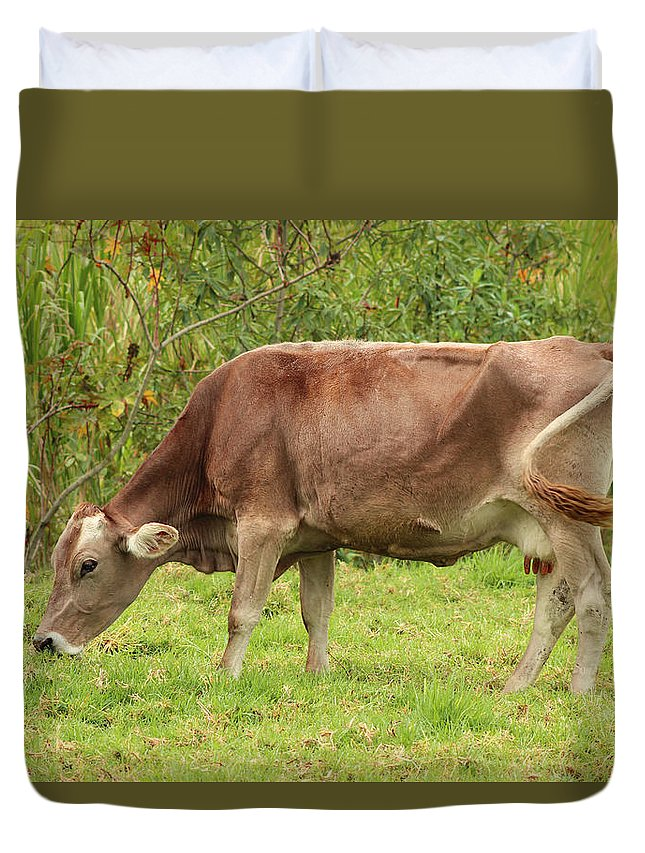 Cow Duvet Cover featuring the photograph Brown Cow Grazing by Robert Hamm