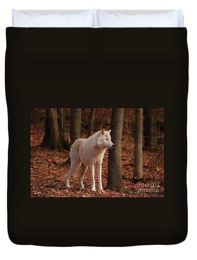 Wolf Duvet Cover featuring the photograph Brown Eyes by Lori Tambakis