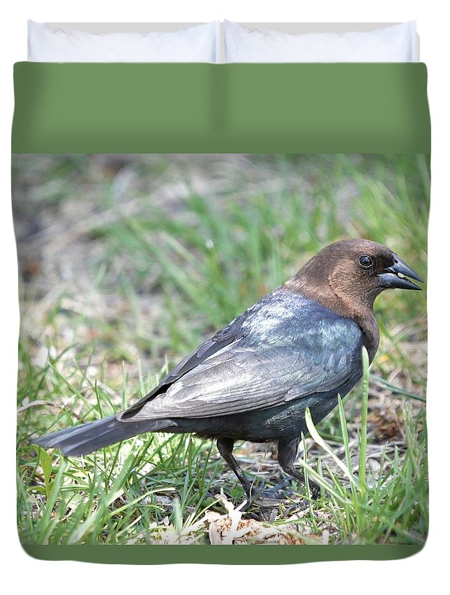 Animal Duvet Cover featuring the photograph Brown-headed Cowbird 2 by Bonfire Photography