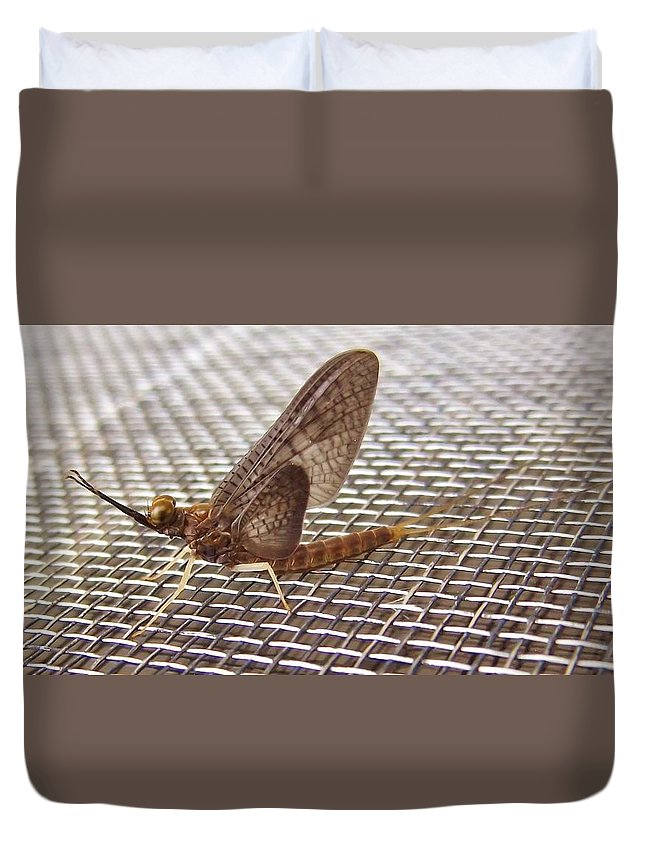 Mayfly Duvet Cover featuring the photograph Brown Mayfly On Screening  Spring   Indiana by Rory Cubel