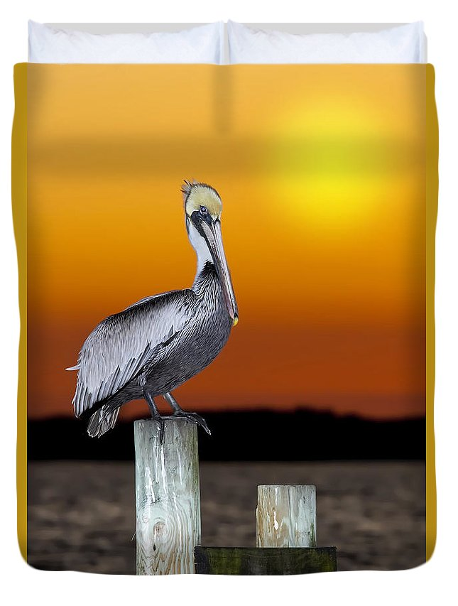 Brown Pelican Duvet Cover featuring the photograph Brown Pelican by Janet Fikar