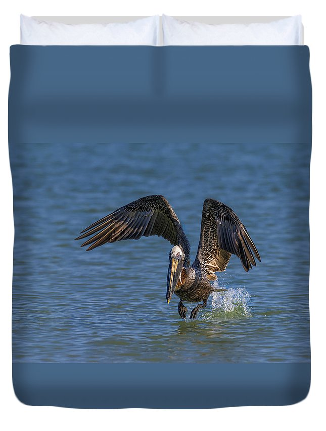 Pelican Duvet Cover featuring the photograph Brown Pelican Taking Off by Susan Candelario