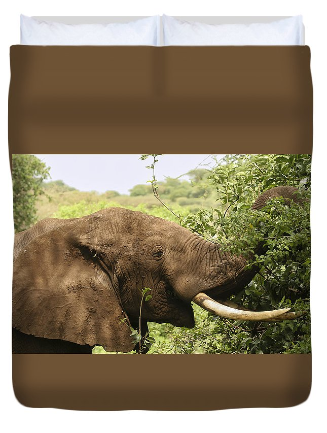Gary Hall Duvet Cover featuring the photograph Browsing Elephant by Gary Hall