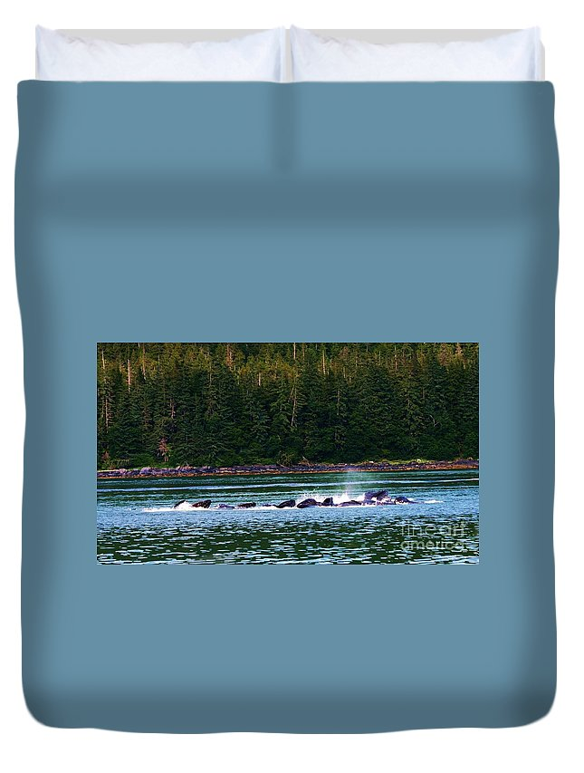 Whales Duvet Cover featuring the photograph Bubble Net Feeding 2 by Donna Cain