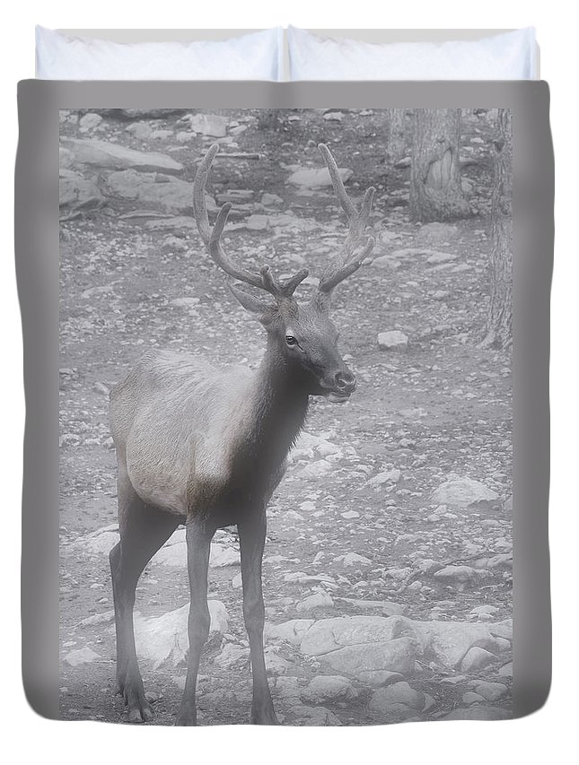 Buck Duvet Cover featuring the photograph Buck In Fog On Hurricane Ridge - Olympic National Forest - Olympic National Park Wa by Christine Till