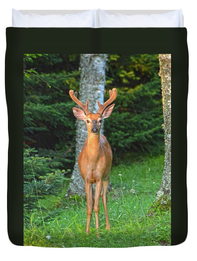 Buck Duvet Cover featuring the photograph Buck Standing Tall by Christine Dekkers