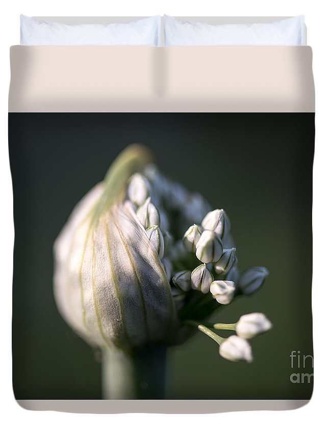 Little Buds Duvet Cover featuring the photograph Budding Red Onion Stem by Sherman Perry