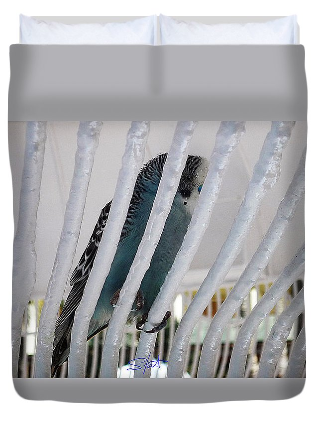 Birds Duvet Cover featuring the photograph Budgerigar by Charles Stuart