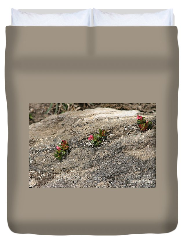 Nature Duvet Cover featuring the photograph Buds Of Beauty Within Harshness by Mary Mikawoz