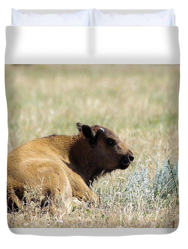 Buffalo Duvet Cover featuring the photograph Buffalo Calf by Jeff Swan
