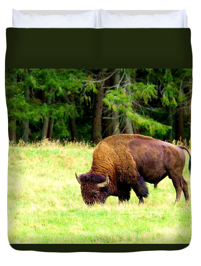 Bison Duvet Cover featuring the photograph Buffalo Crossing by Jeff Swan