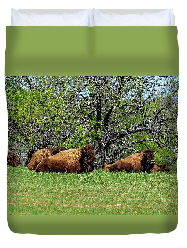 Texas Duvet Cover featuring the photograph Buffalo Resting In A Field by Marilyn Burton