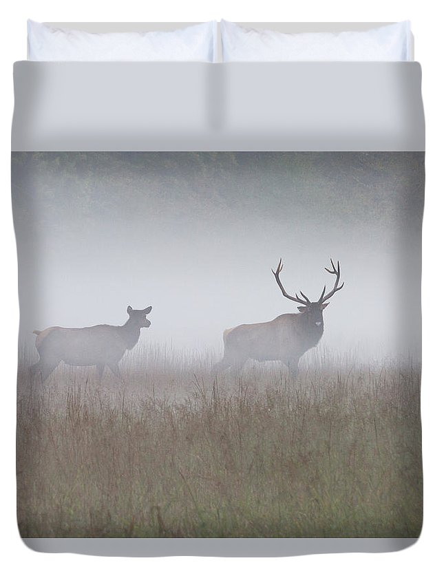 Elk Duvet Cover featuring the photograph Bull And Cow Elk In Fog - September 30 2016 by D K Wall
