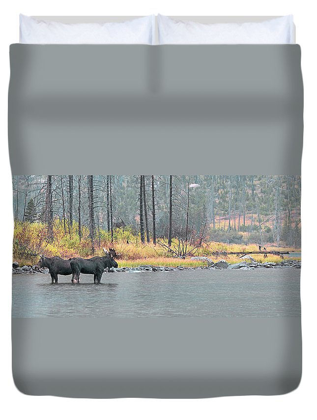 East Rosebud Duvet Cover featuring the photograph Bull And Cow Moose In East Rosebud Lake Montana by Gary Beeler
