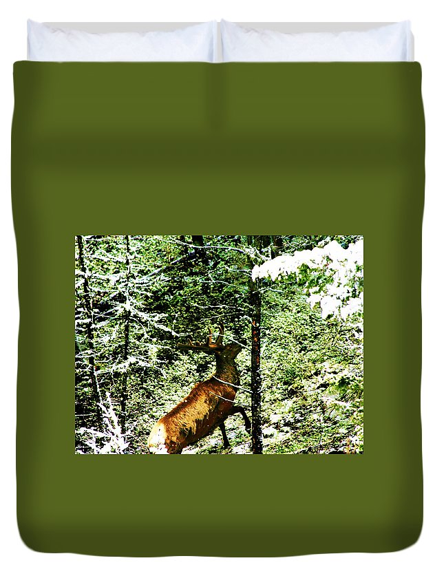 Elk Duvet Cover featuring the photograph Bull Elk by Donna Cain