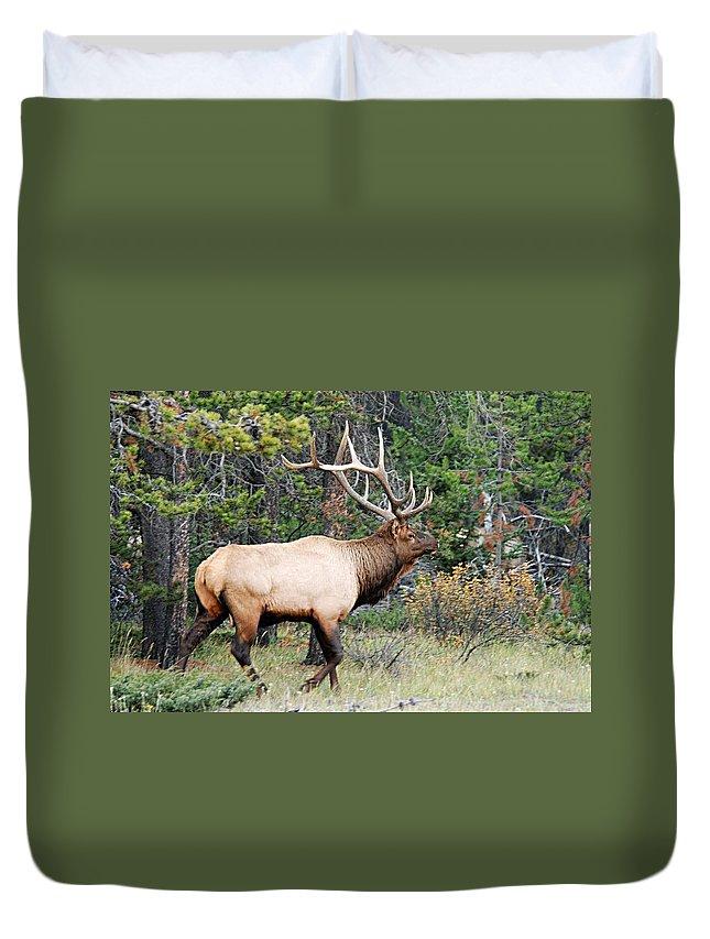 Bull Elk Duvet Cover featuring the photograph Bull Elk by Larry Ricker
