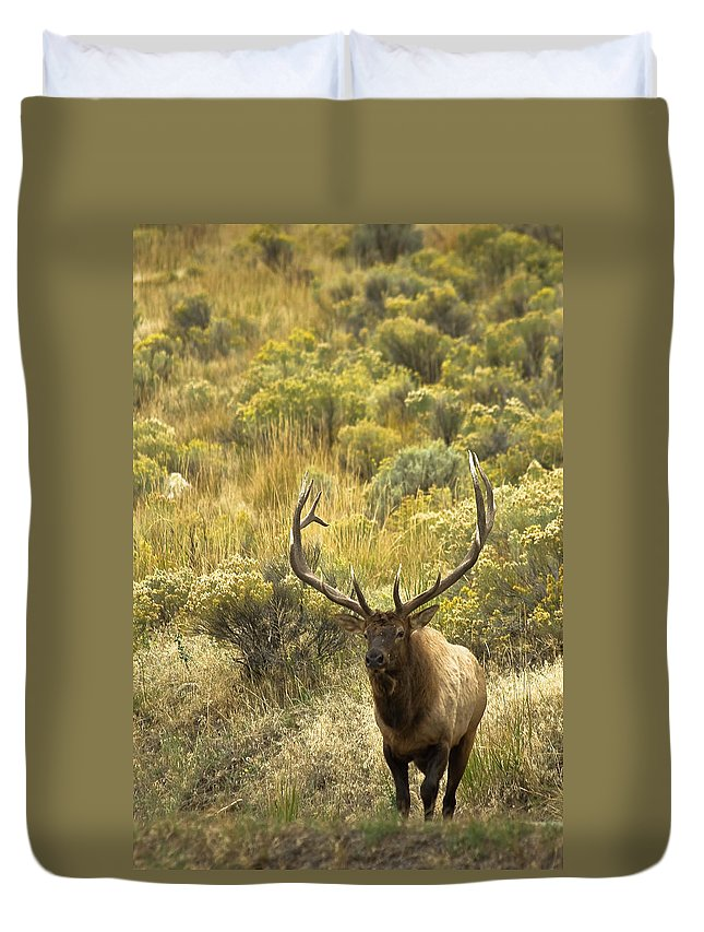 Bull Elk Duvet Cover featuring the photograph Bull Elk by Roger Mullenhour