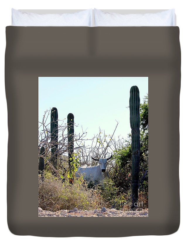 Bull Duvet Cover featuring the photograph Bull In The Desert Of Mexico by Charlene Cox