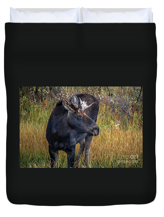 Moose Duvet Cover featuring the photograph Bull Moose by Wayne Heim