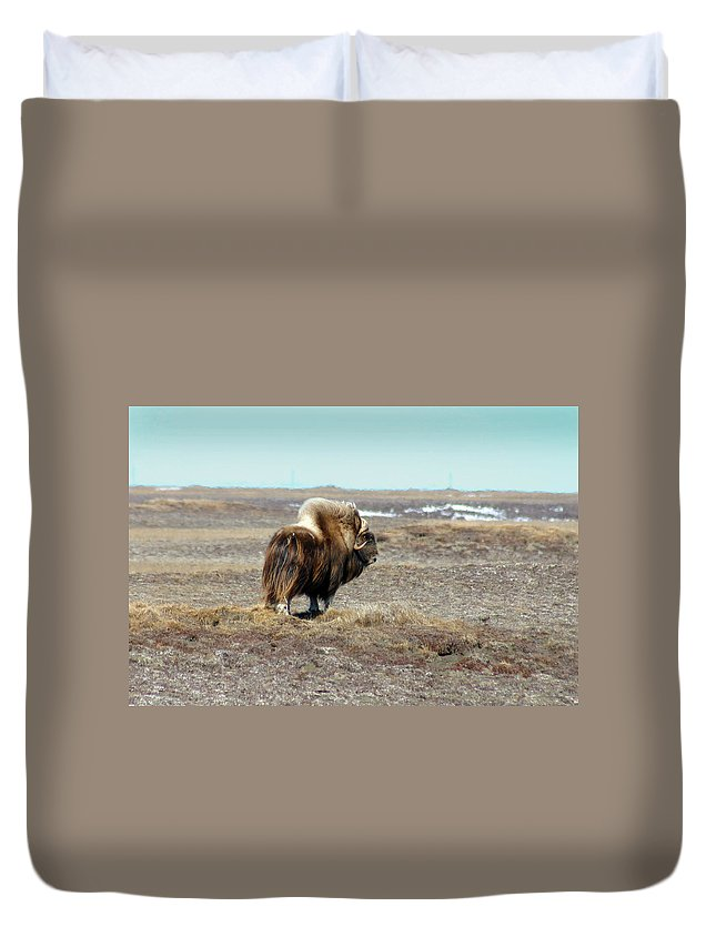Bull Duvet Cover featuring the photograph Bull Musk Ox by Anthony Jones